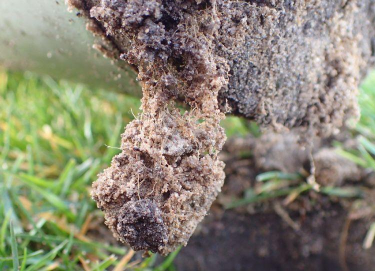Figuur 1: Structuur wordt gemaakt door bodemorganismen en diepe beworteling. Beluchten helpt bij het scheppen van de goede voorwaarden.
