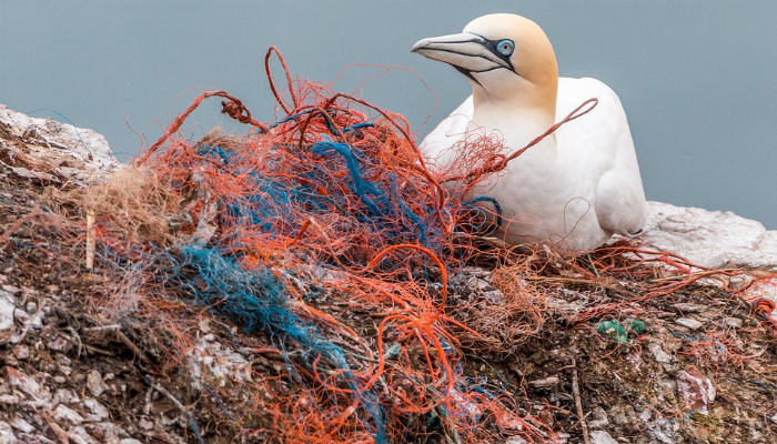 Veel van het plastic zwerfvuil belandt uiteindelijk in zee