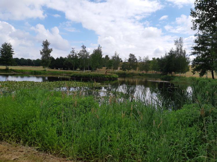 Golfbanen lenen zich uitstekend om biodiversiteit te bevorderen.